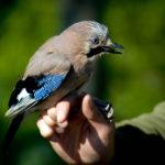 Noti ocells2